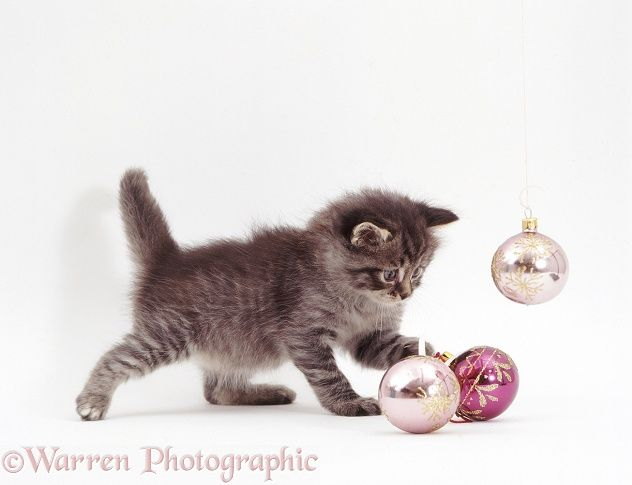 pin by susan greenlee on cute kitten or cat photos with