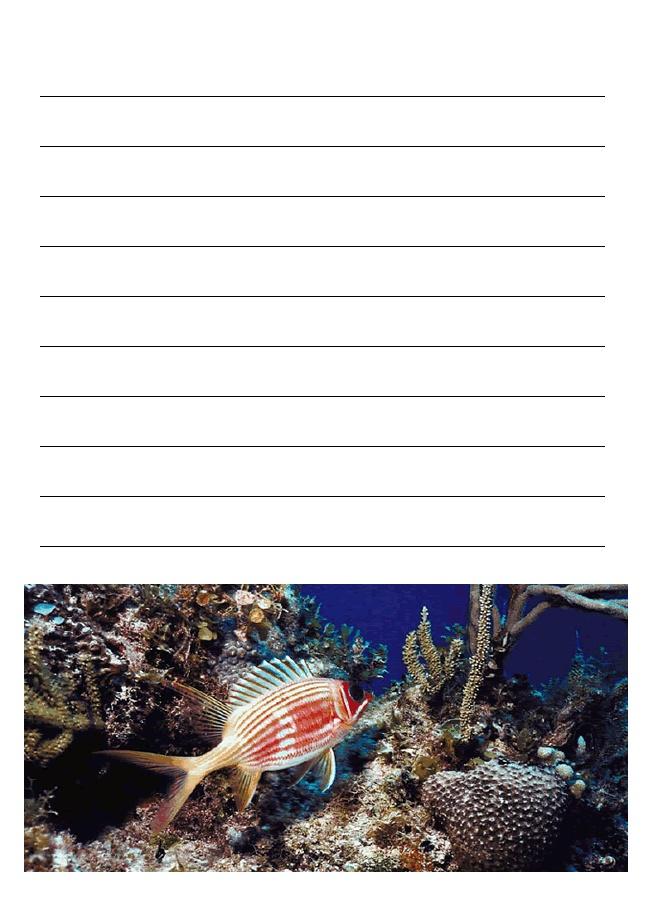 coral reef essay