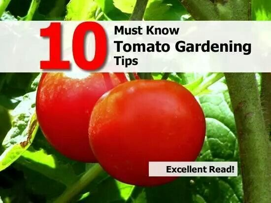Tomato Gardening Tips Project Wish List Pinterest