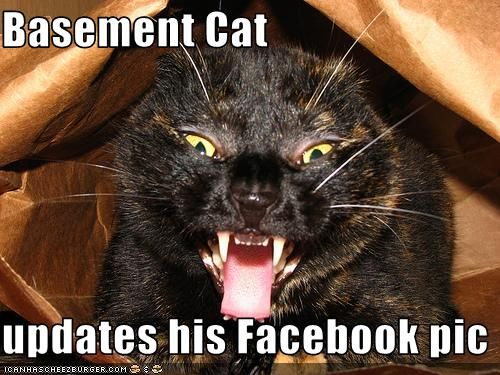 basement cat updates his facebook pic