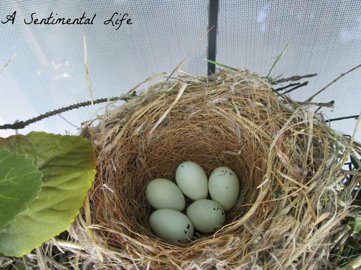 Purple Finch Nest Purple Finch birds nes...