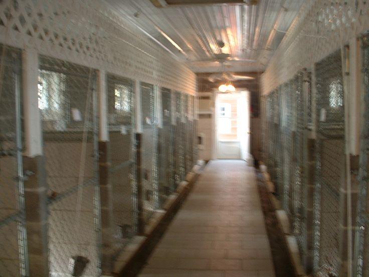 Dog kennel designs inside our newest kennel building we for Building dog kennels for breeding