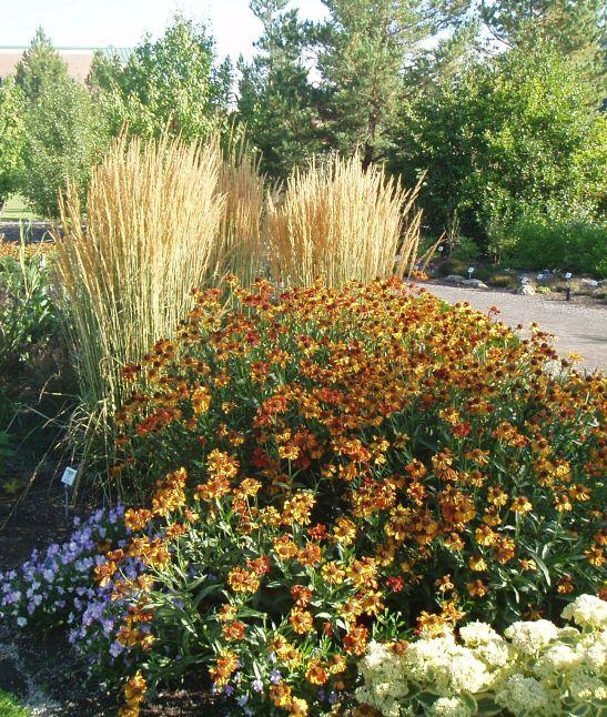 Perennial Grasses For Alberta : Ornamental grasses in alberta home garden yard