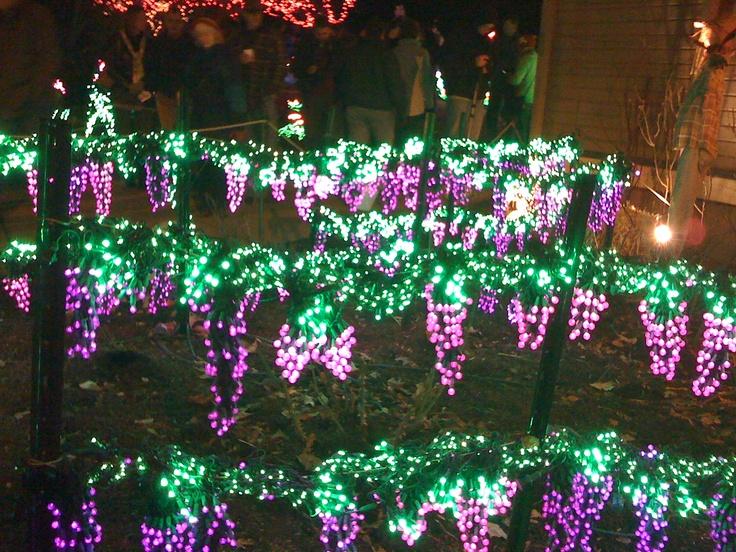 Bellevue Botanical Garden Light Show
