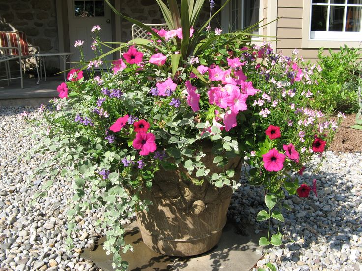 Full Sun Container Garden Ideas Photograph great container