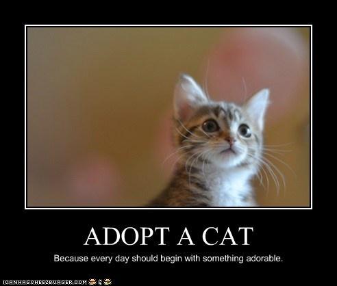 adopt a cat animals pinterest