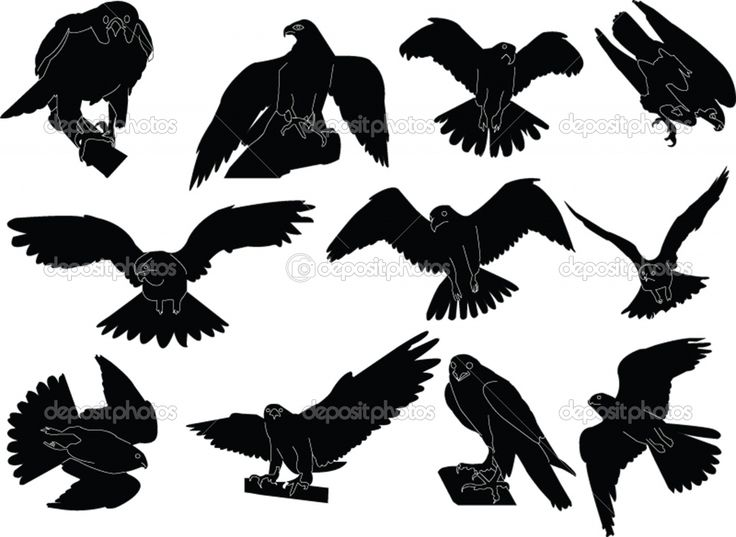 Hawk Vector SilhouettesFlying Hawk Silhouette