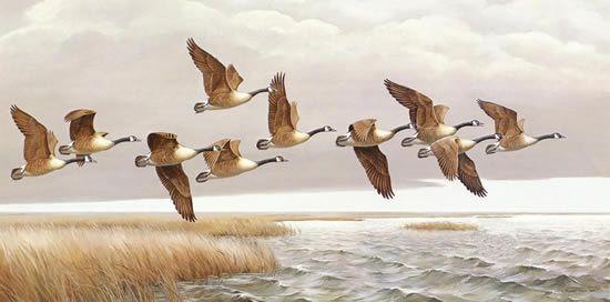 Рисунки маркером сова