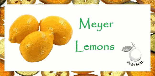 chutney meyer lemon risotto meyer lemon marmalade meyer lemon ...