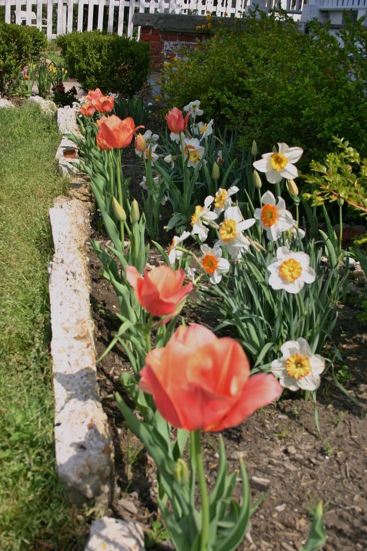 Spring garden ideas on pinterest photograph my little corn for Spring garden ideas