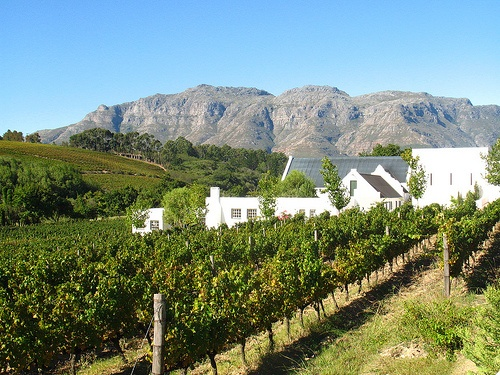 Stellenbosch South Africa  city photos gallery : The beautiful countryside of Stellenbosch, South Africa