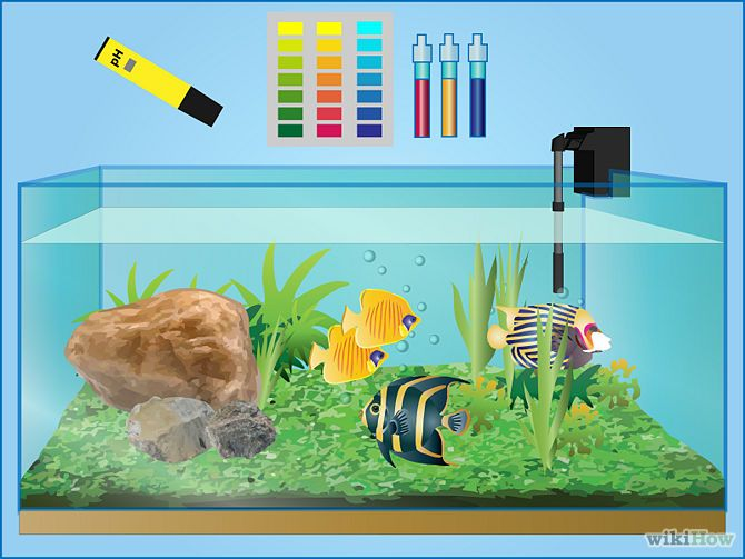 How to take care of your fish tanks for Taking care of fish