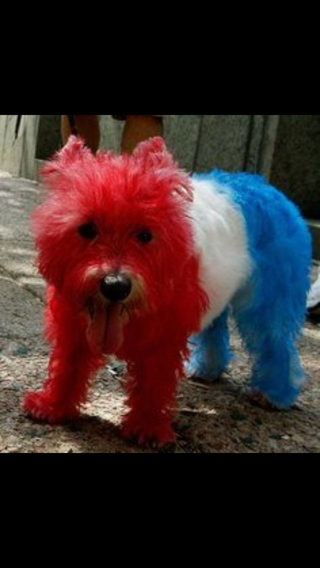 july 4th dog images