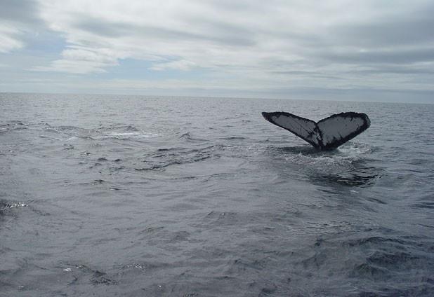 ballena azul - photo #32