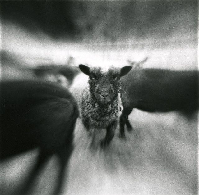 blur_sheep | Flickr - Photo Sharing!