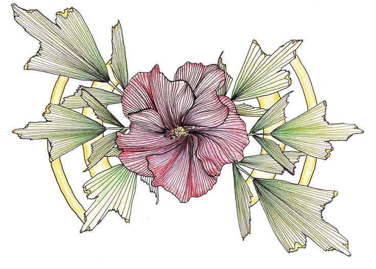 Hibiscus Flower Line Drawing : Line drawing flowers hibiscus drawings pinterest