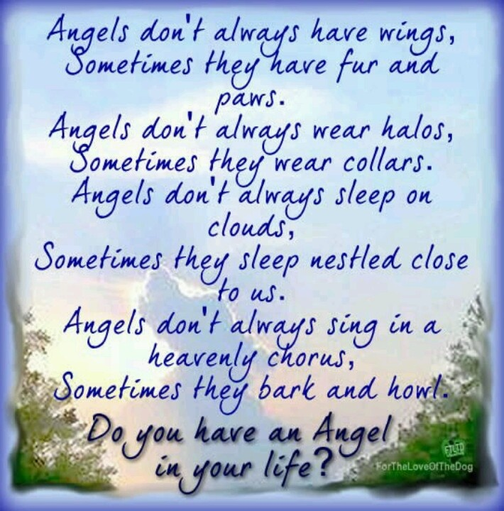 Angels In Heaven Dog Quotes Quotesgram