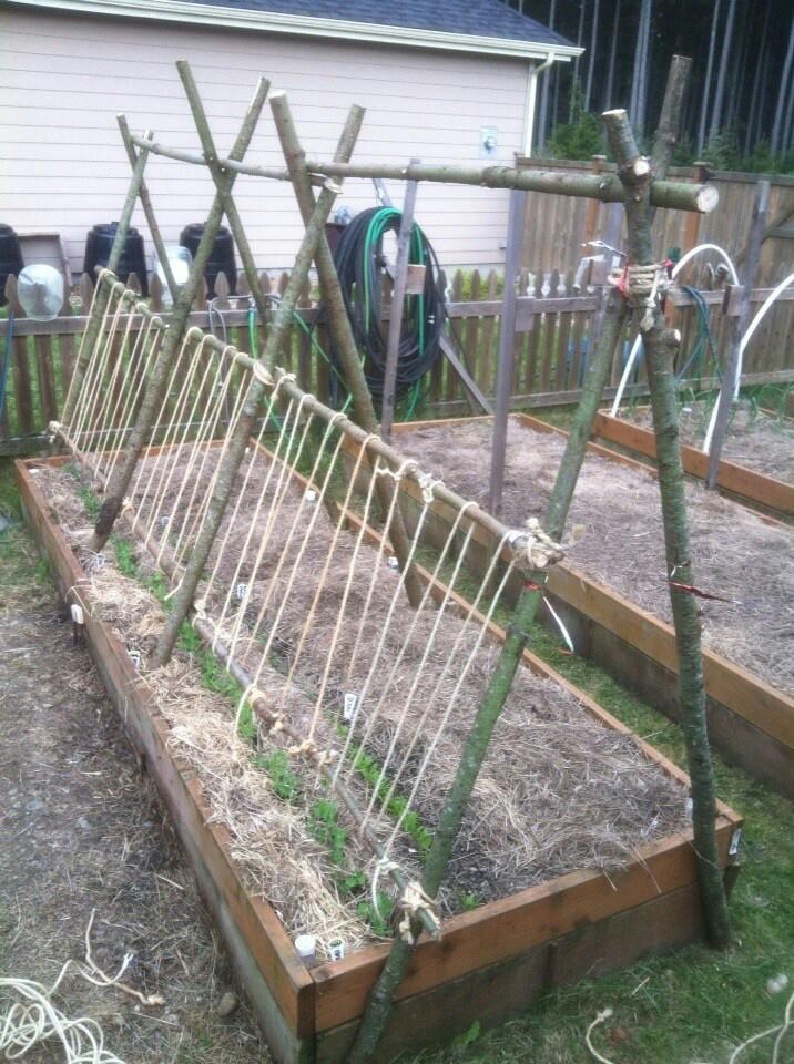 Free Garden Trellis Ideas graph Free pea trellis
