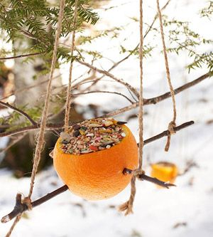 Hollow out an orange and fill with seeds to feed your feathered friends.