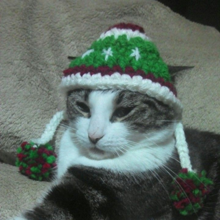 Crochet Cat Hat : Crochet Cat Hat Craft Ideas Pinterest