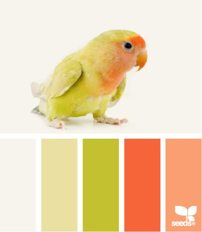 feathered color pallette