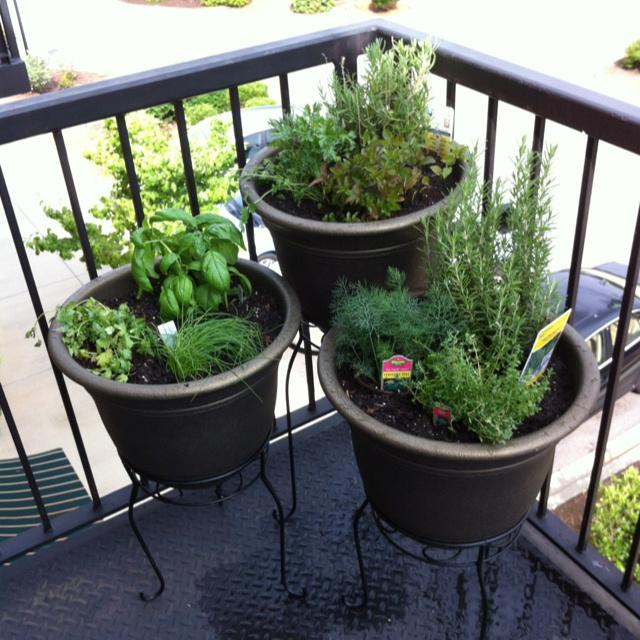 Balcony Herb Garden Dream Home Pinterest 640 x 480