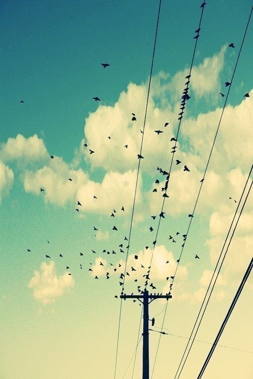 The lines of the telephone pole make it easier for your eyes to follow the path of the birds.