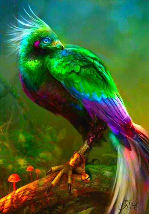 Bird of paradise animal drawing - photo#7
