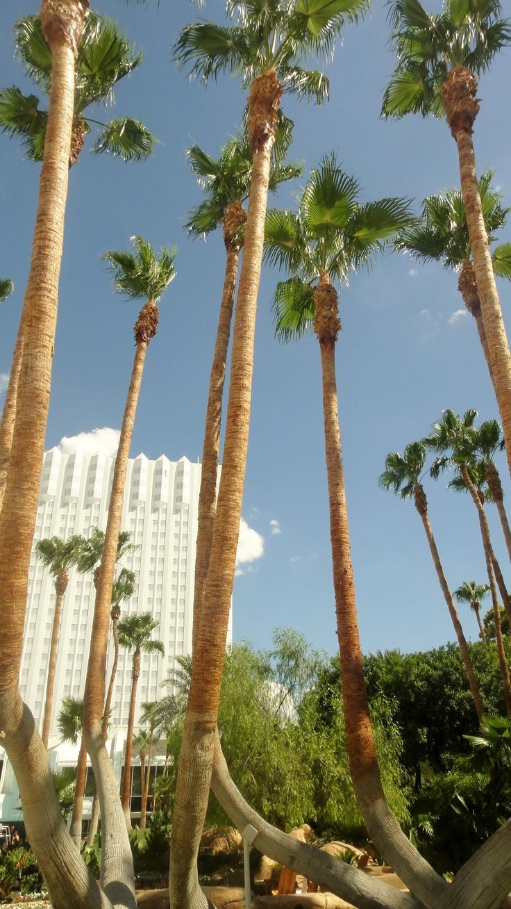 Las Vegas Strip!