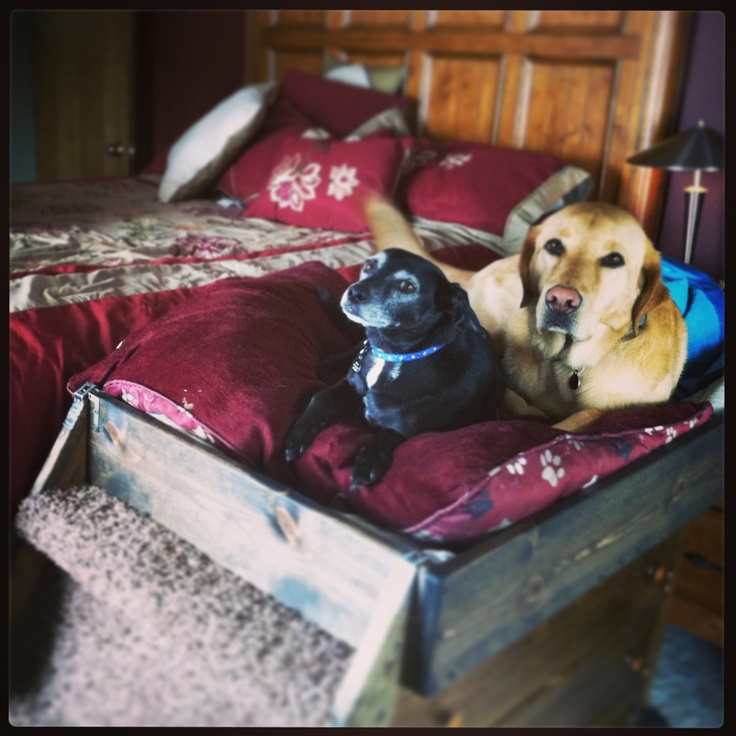 Homemade dog bed dog shelters and beds pinterest for Homemade pet beds