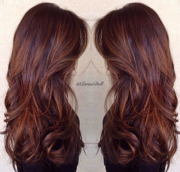 The perfect color. Chocolate with butterscotch light hair. Photo ...