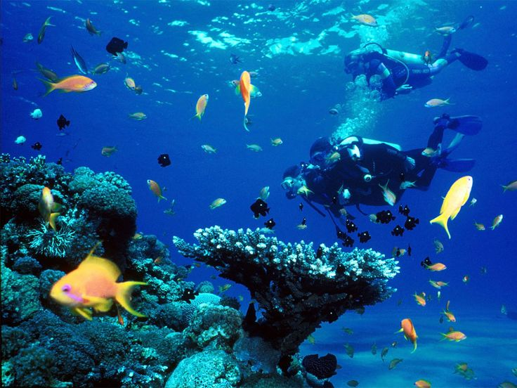 Scuba diving in bonaire places i 39 ve been pinterest for Red fish blue fish key west