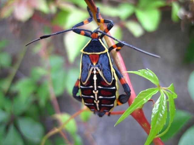 colorful insect | Bugs Life | Pinterest