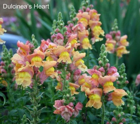Pin By Shelley Beck On Flower Garden Pinterest