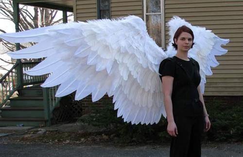 Как сделать крылья из перьев своими руками - Club-j.ru