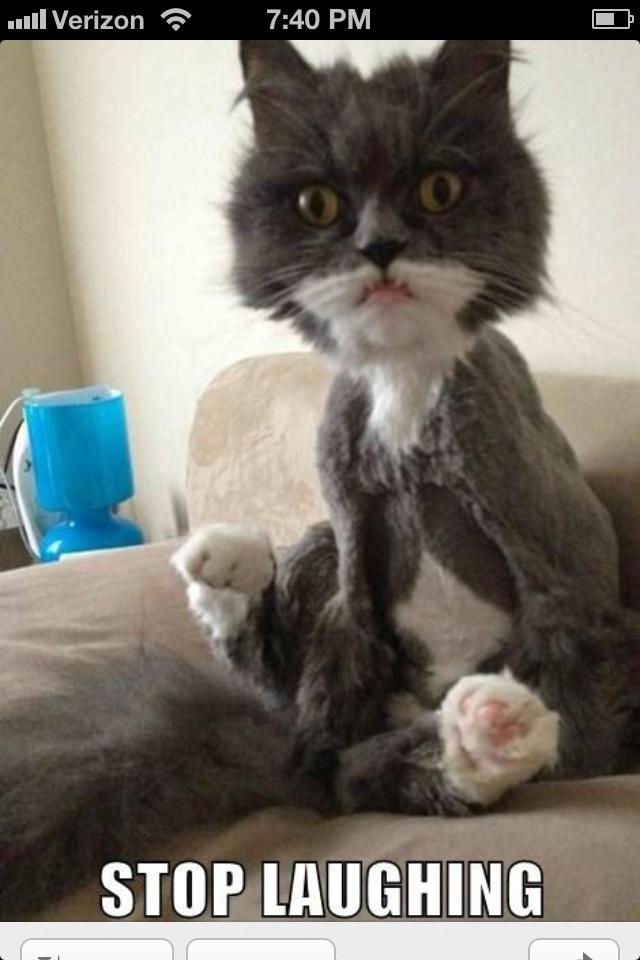 Hahaha no cat Hahaha