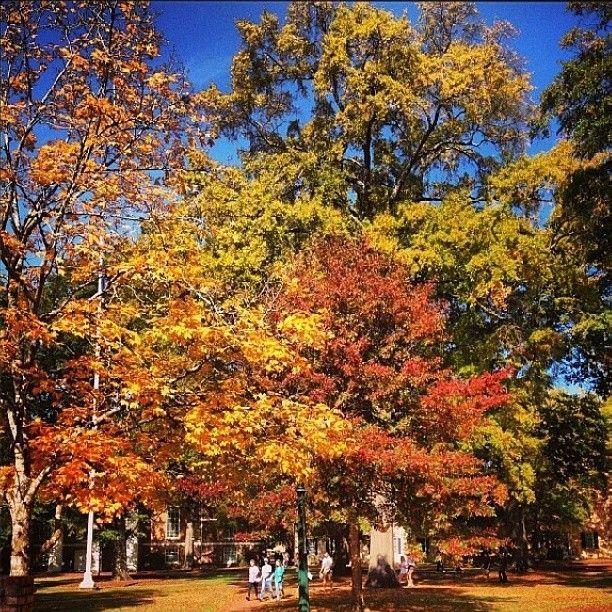 Colorful leaves on the #UofSC Horseshoe. Photo by southcarolina7: http://instagram.com/p/g4kq-wOsJU/