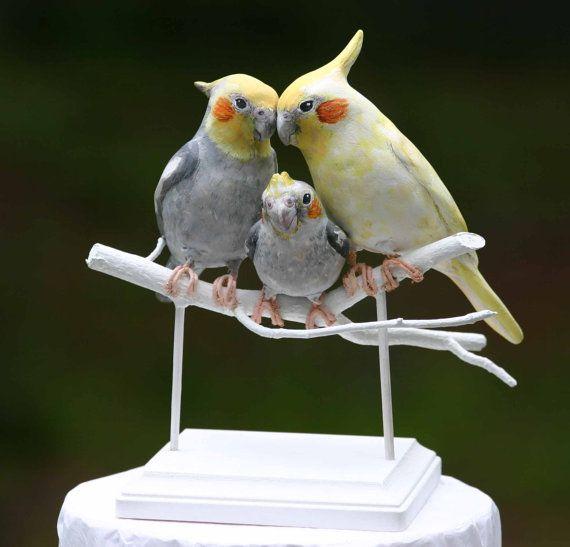 Cute baby cockatiel - photo#7