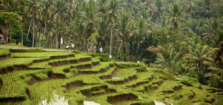 Soulshine Retreat, Ubud