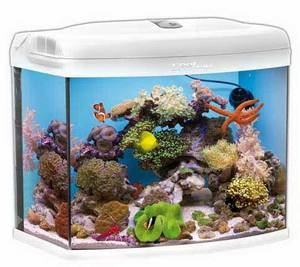 Pin by aquarist classifieds on uk fishkeeping items for for Saltwater fish tank kit