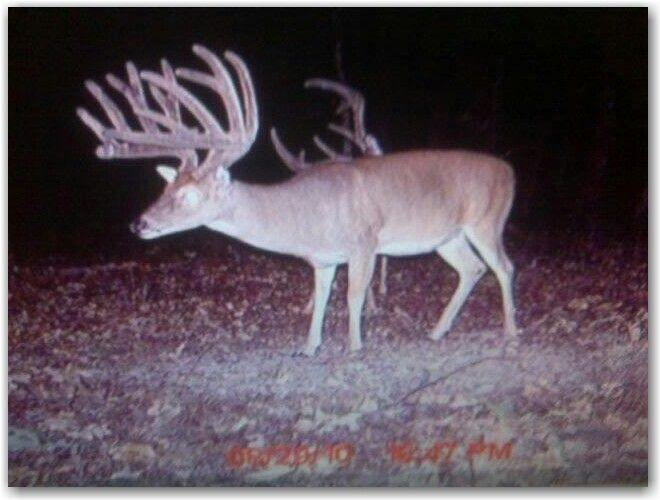 Big Buck Whitetail Deer On Trail Cam