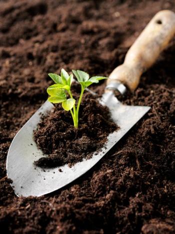Testing soil composition garden pinterest for Soil composition