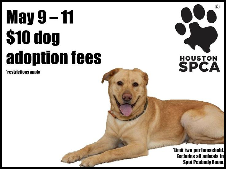 Where Can You Adopt A Dog In Houston