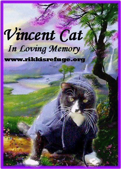 memorial day cat images
