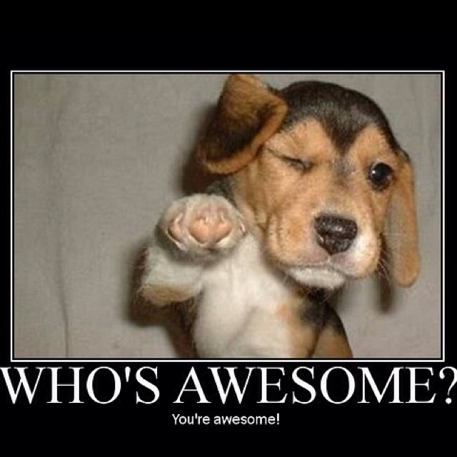 You Re Awesome: Funny Stuff That Makes Me Smile