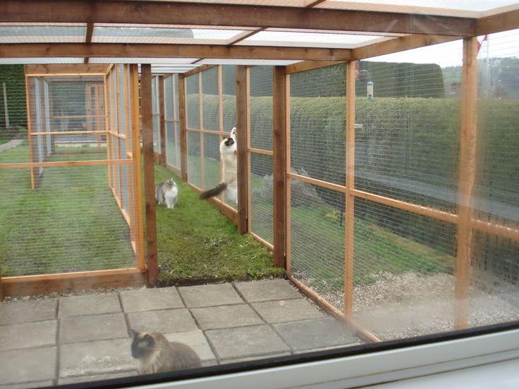 Outdoor Cat Run - Pet Forums Community