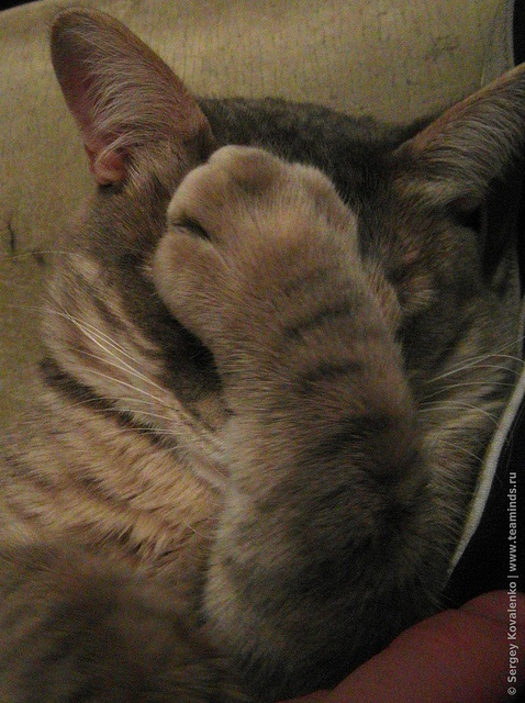 Facepalm | ...faceplant? | Pinterest