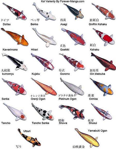 Animal koi fish art fish fish patterns pinterest for Different types of koi fish
