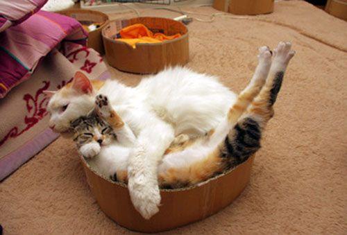 BIG kitteh hugs!