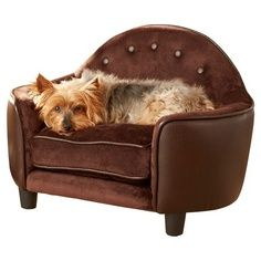 Home Decorating on Dog Couch   Home Decor